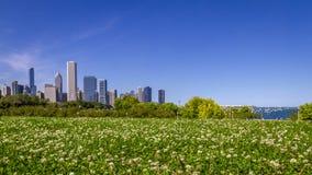 Horisont av Chicago över fält av blommor arkivbild