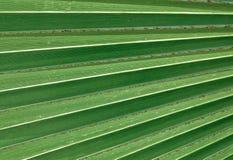 Horisontal av grön palmblad texturerad bakgrund Royaltyfria Bilder