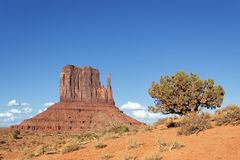 Horisontal beskåda av den stam- monumentdalnavajoen parkerar Arkivbild