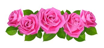 Horisontal Composition With Pink rose flowers. Isolated on white. Background Stock Photo