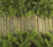 Horisontal conifer background Stock Image