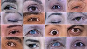 Horisontal Movement of Different Types of Eyes stock video