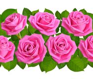 Horisontal seamless border with pink rose flowers. Isolated on w. Hite background Royalty Free Stock Images