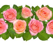 Horisontal Seamless border with Pink roses. Isolated on white ba. Ckground Stock Photo