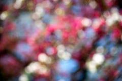 Horisontalbakgrund för rosa bokeh Royaltyfri Fotografi
