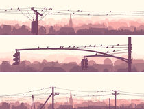 Horisontalbaner av flockfåglar på stadskraftledningar. Fotografering för Bildbyråer