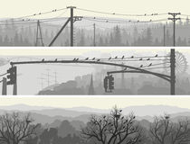 Horisontalbaner av flockfåglar på träd och kraftledningar. Royaltyfria Bilder
