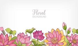 Horisontalbanret eller blom- bakgrund som dekoreras med ljusa kulöra blommande lotusblommablommor och sidor kantar i botten stock illustrationer