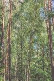 Horisontalbild av frodig tidig vårlövverk - vibrerande gräsplansp arkivbilder