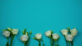 Horisontalblått baner med vita rosor och ställe för text Stoppa r?relseanimeringen stock video