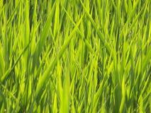 Horisontalgräsbakgrund Arkivbilder