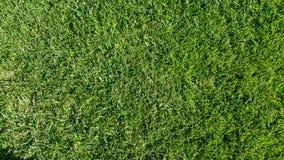 Horisontalsammansättning för grönt gräs Arkivfoton