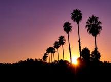 horisontalsikt av en livlig solnedgång med sunburst och konturn av palmträd arkivfoton