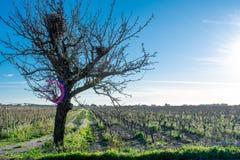 Horisontalsikt av ett träd med rede tre nära druvor Plantati royaltyfria foton