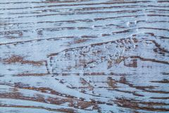 Horisontalsikt för Longstanding naturlig träbakgrund arkivbild
