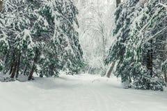 Horisontalvinterlandskap, granar som täckas med snö arkivfoto