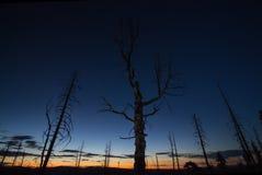 Horisonten glöder efter solnedgång, med konturerna av döda träd i förgrunden Royaltyfria Bilder