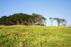 Horizon. Landscape with plants , trees and blue sky in northern Spain Royalty Free Stock Images