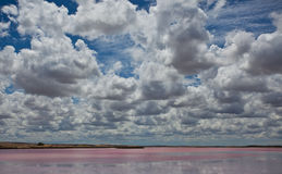 Horizon australien et brin rose Photos stock