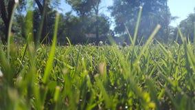Horizon d'herbe Photographie stock libre de droits