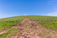 Horizon de chemin de terre de Hillside de ferme Image libre de droits