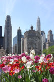 Horizon de Chicago avec des fleurs Photo stock