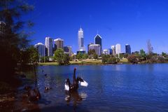Horizon de Perth avec un lac et un cygne noir photographie stock