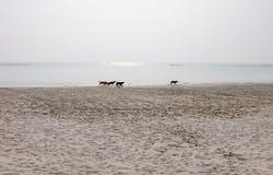 Horizon de plage avec un groupe de chienchien Images stock