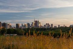 Horizon en de Installatie de Van de binnenstad Foilage van Toronto Royalty-vrije Stock Afbeeldingen