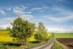 Horizon with field road Royalty Free Stock Image