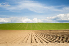 Horizon with fields Stock Images