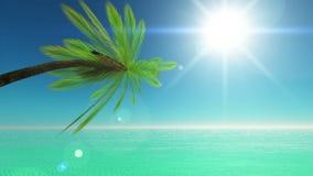 Horizon. Image of palm trees and horizon stock video footage