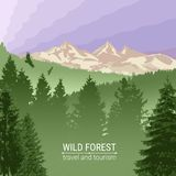 Wild forest. Sunrise, mountains, pine and spruce. Eagles, and birds in flight. Tourism and travel. Camping. The horizon line. The horizon line in the fog stock illustration