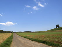 Horizon and Meadows. Path to the horizon with meadows under a blue sky Royalty Free Stock Images