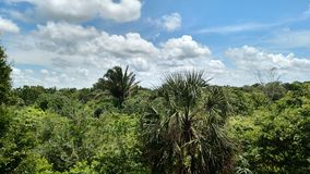 Horizon over Mexico. Lush green trees under clouds Royalty Free Stock Photos