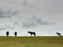 Horizon Ponies. Ponies on the Horizon near bratley view in the new forest Stock Images