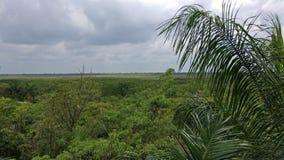 Horizon at riviera maya jungle. View of the horizon stock images
