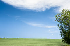 Horizon with round cloud and tree Stock Image