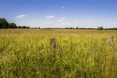 Horizon. Rural spot - bright day - clear sky Stock Image