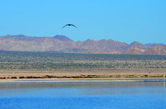 Horizon at the Salton Sea Royalty Free Stock Photography