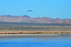 Horizon at the Salton Sea. Colorful landscape at the Salton Sea Royalty Free Stock Photography