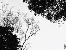 Horizon Sillhouette royalty-vrije stock afbeeldingen