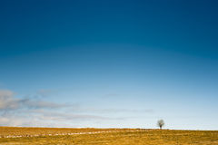 Horizon with a tree Royalty Free Stock Photos