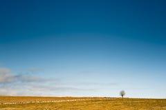 Horizon with a tree Royalty Free Stock Photos