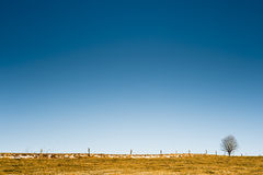 Horizon with tree and fence Stock Photography