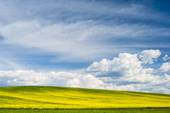 Horizon with yellow field Royalty Free Stock Photography