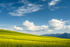 Horizon with yellow field Royalty Free Stock Image