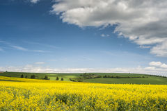 Horizon with yellow field Stock Image