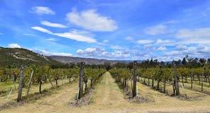 Horizont del viñedo Fotos de archivo