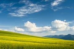 Horizont mit gelbem Feld lizenzfreies stockbild